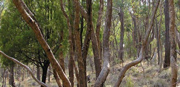 Chewton Bushlands